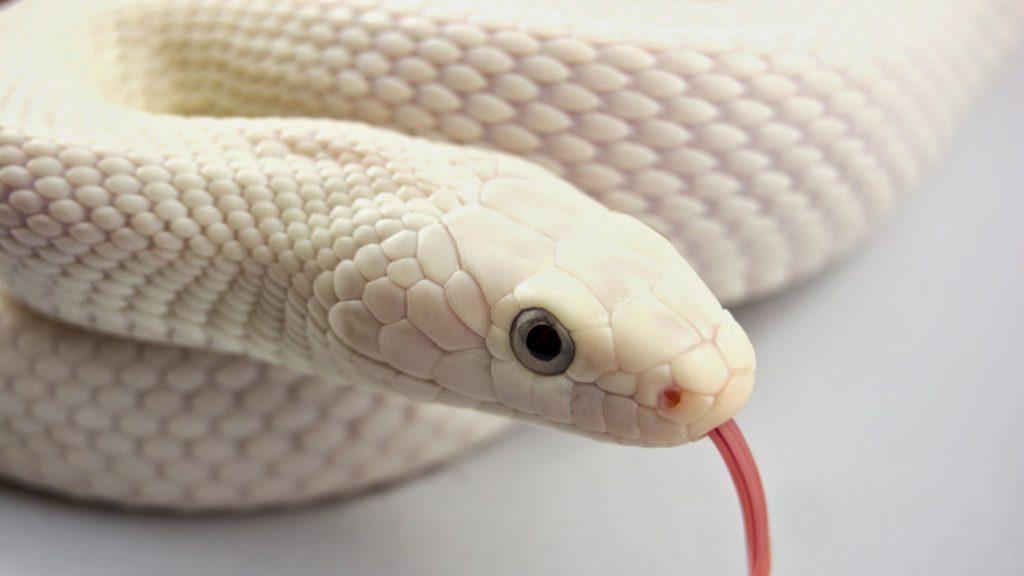 ¿Qué significa soñar con serpientes? 2020