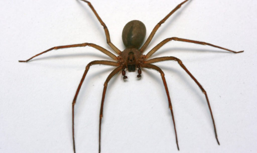 Qué significa solar con arañas