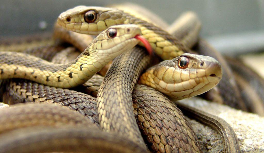 ¿Qué significa soñar con serpientes? 2019