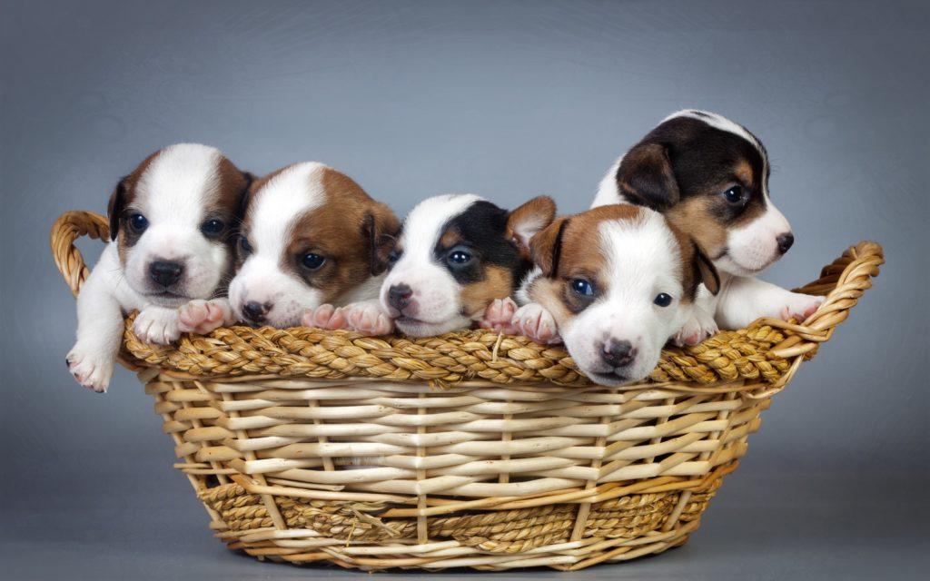 ¿Qué significa soñar con perros? 2020
