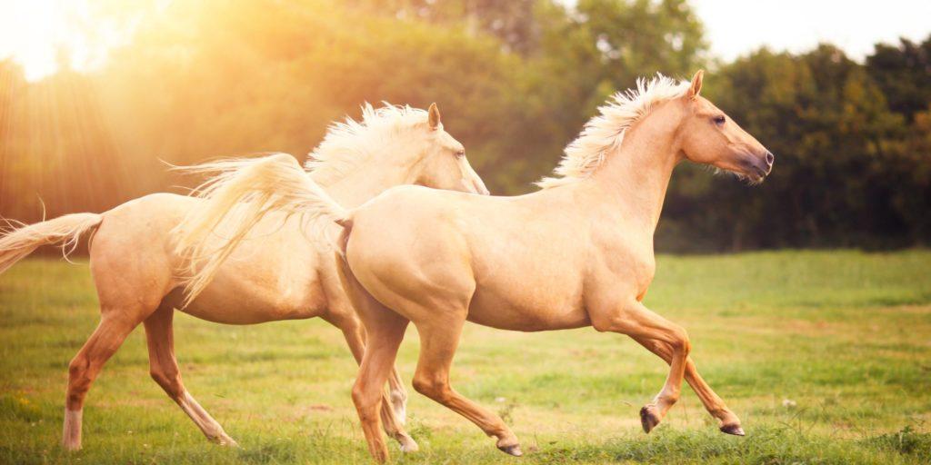 Soñar con caballos 2019