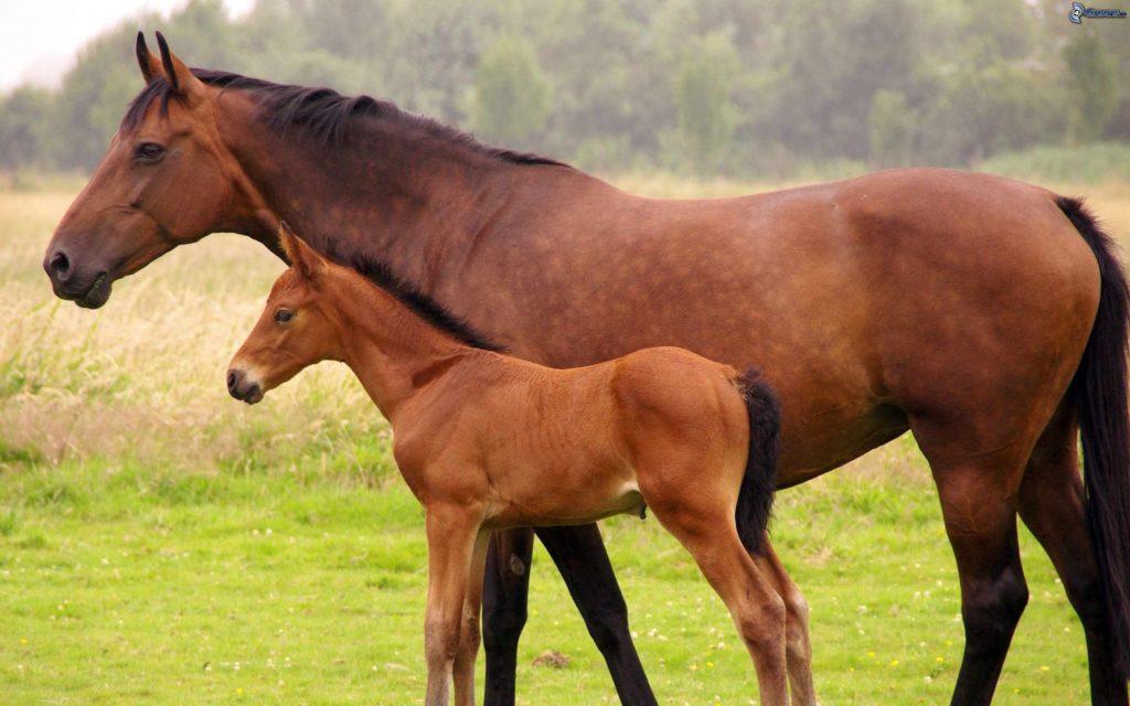 caballos potro 170893