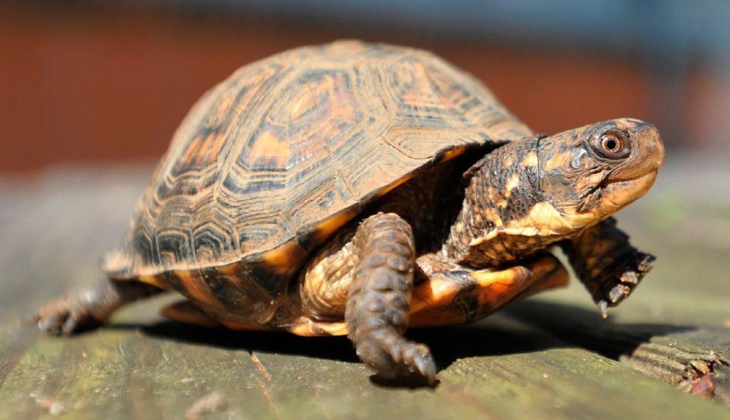 Soñar con tortugas 2020