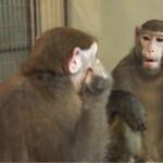 ¿Que significa soñar con monos?