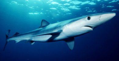 ¿Que significa soñar con tiburones?