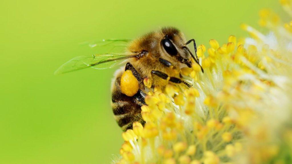 Soñar con abejas 2019