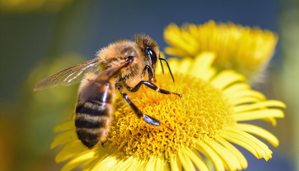 Soñar con abejas 2020