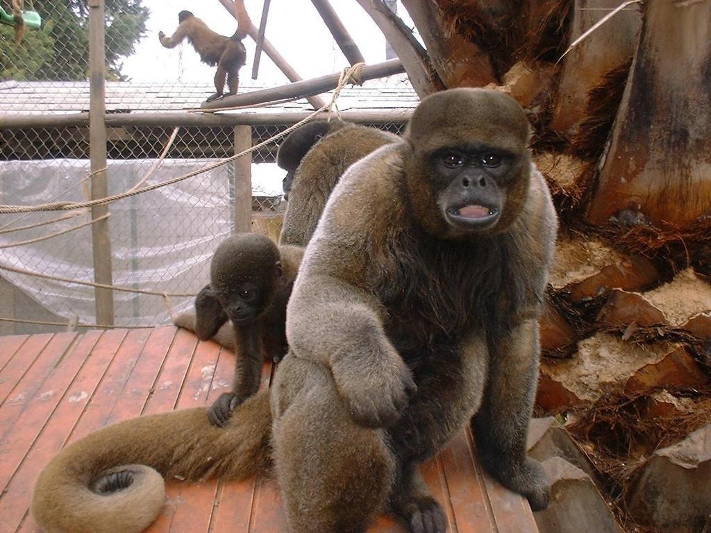 ¿Que significa soñar con monos? 2020