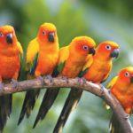 Significado de soñar con pájaros