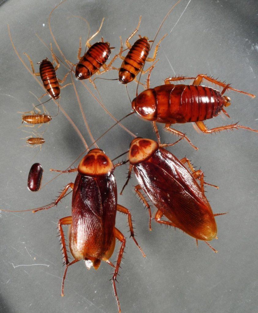 ¿Qué significa soñar con cucarachas? 2021