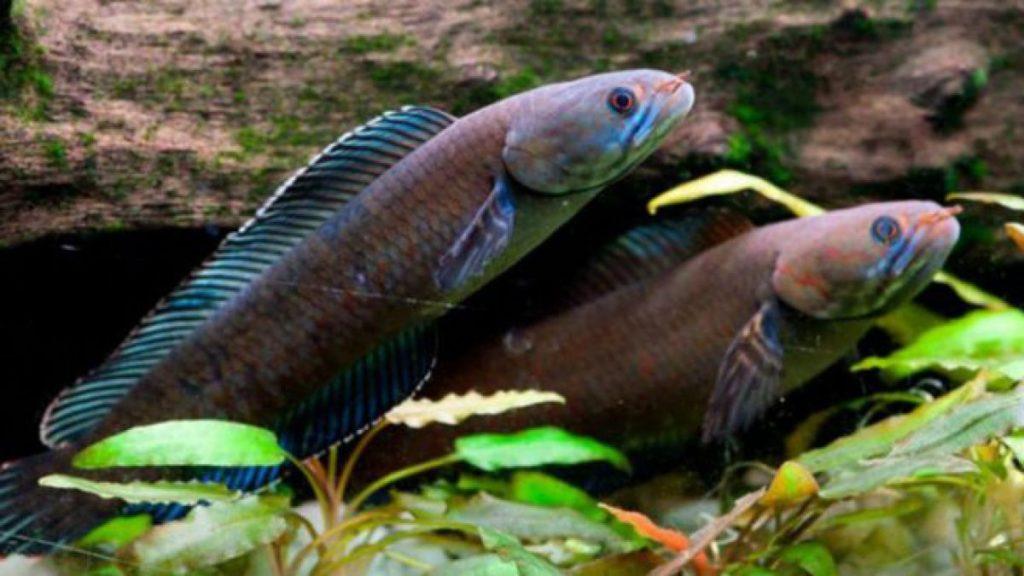 ¿Qué significa soñar con peces? 2021