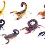 ¿Qué significa soñar con escorpiones?