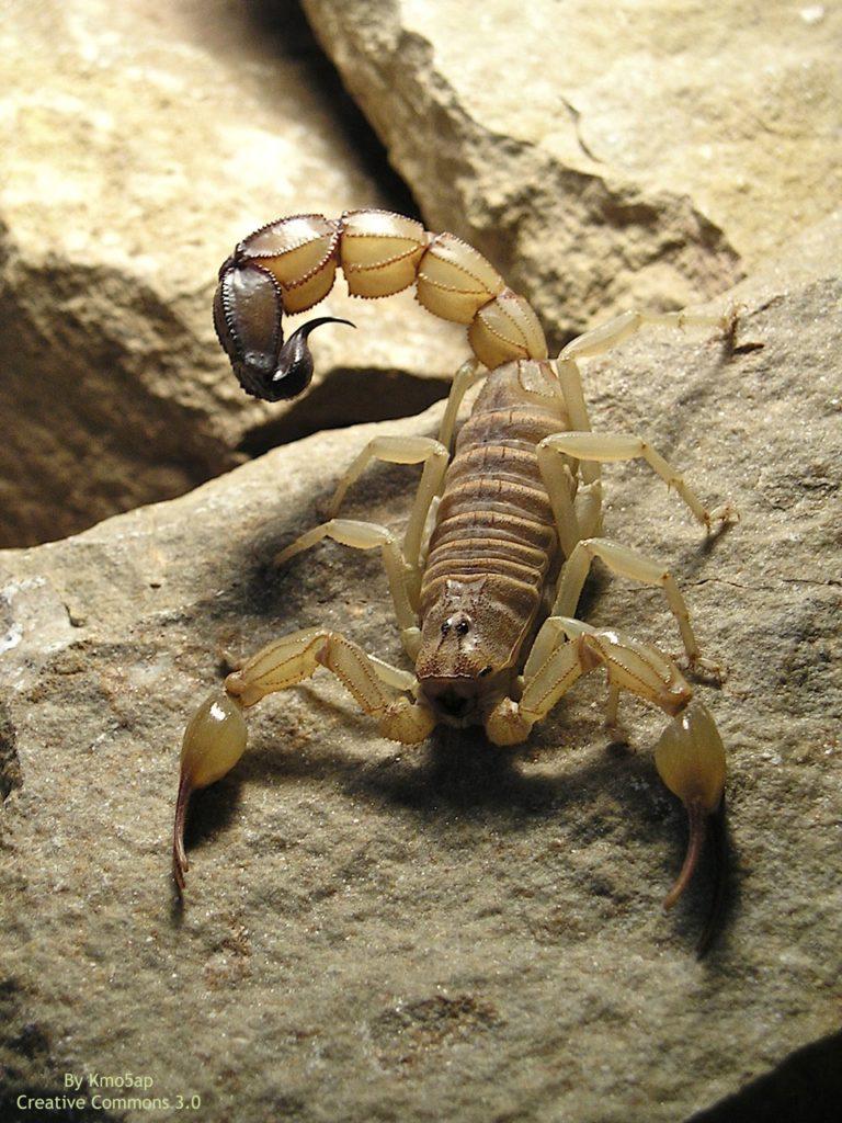 ¿Qué significa soñar con escorpiones? 2020