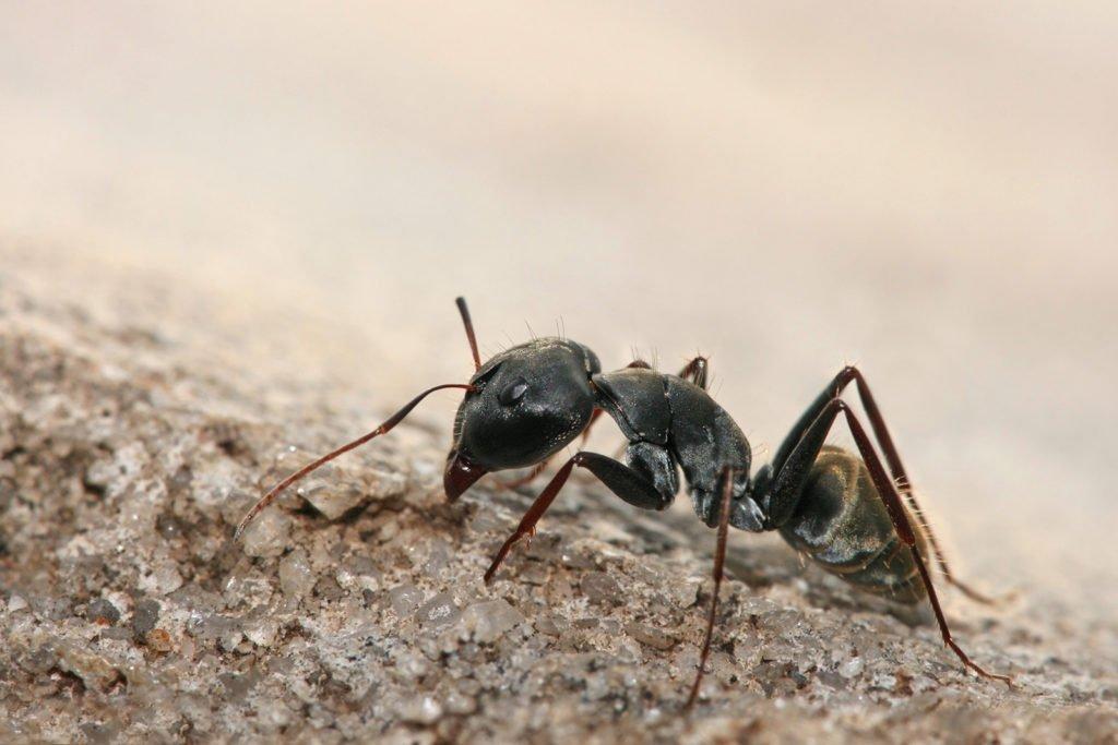 ¿Qué significa soñar con hormigas? 2020