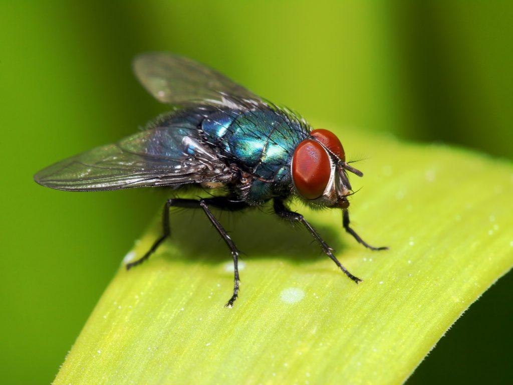 ¿Qué significa soñar con moscas? 2019