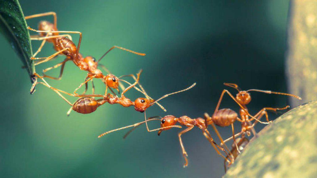 ¿Qué significa soñar con hormigas? 2019