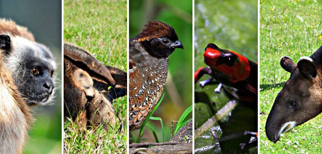 Descubre la variedad de significados de soñar con animales 2020