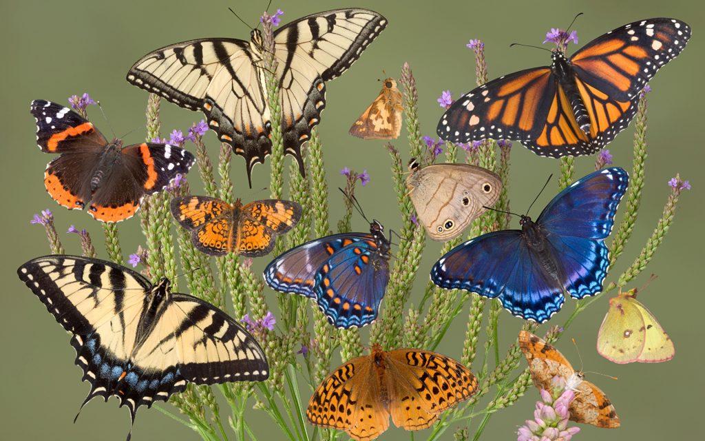 Significado de soñar con mariposas 2021