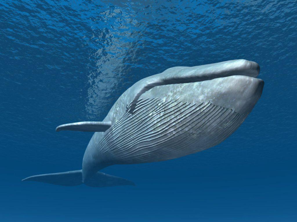 ¿Qué significado tiene soñar con ballenas? 2019