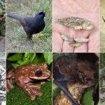 Descubre la variedad de significados de soñar con animales
