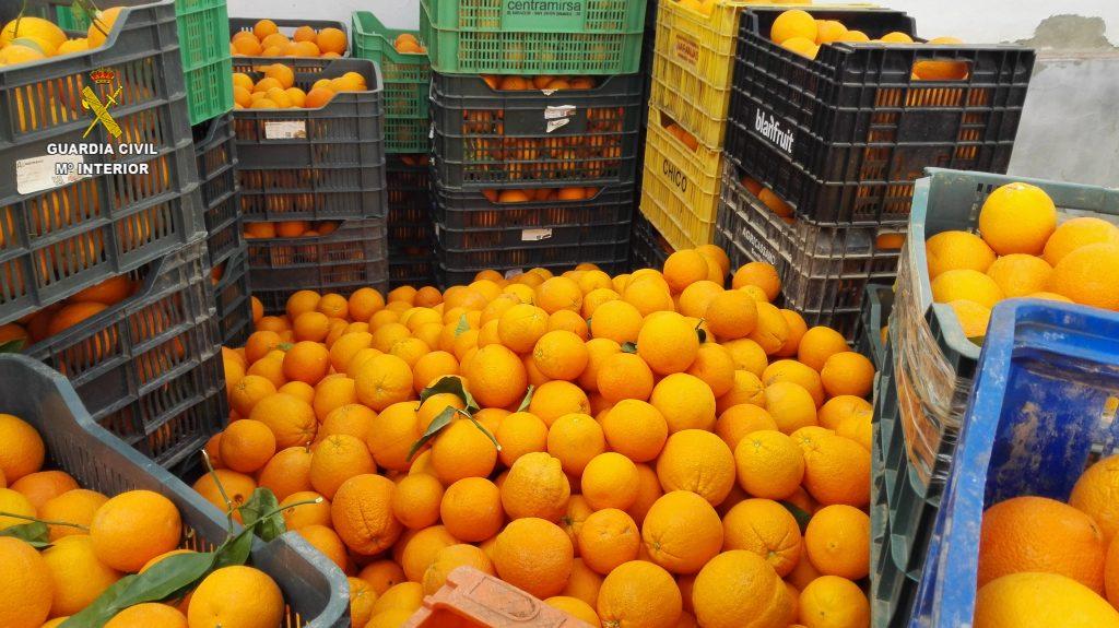 Todo lo que hay que saber sobre soñar con naranjas 2019