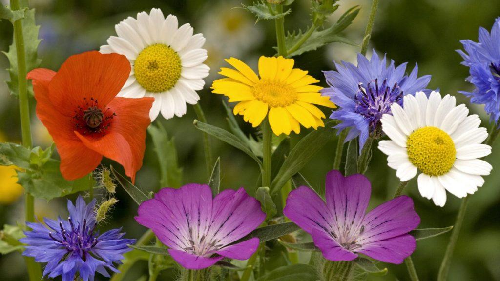 Soñar con flores, significados buenos y malos 2020