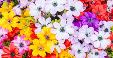 Soñar con flores, significados buenos y malos