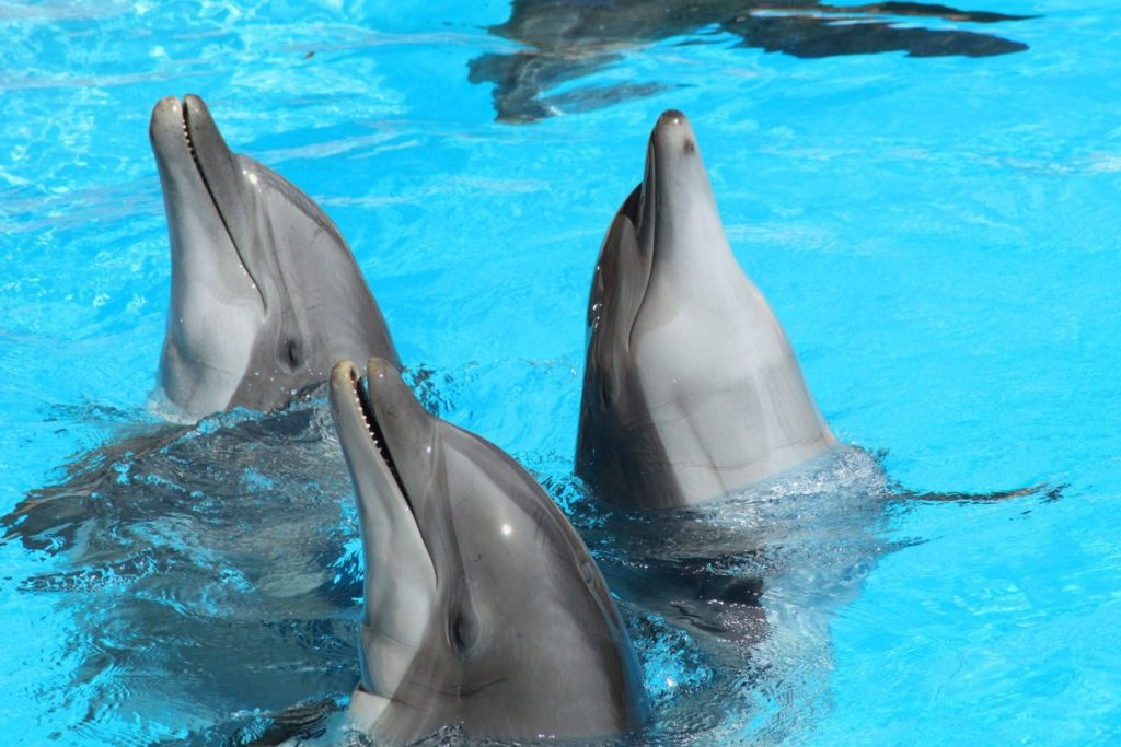 ¿Qué puede significar soñar con delfines? 2021
