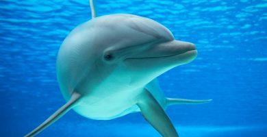¿Qué puede significar soñar con delfines?