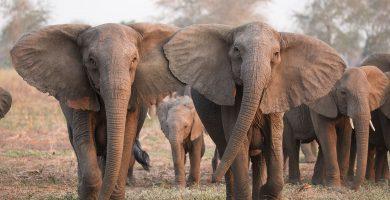 Soñar con elefante, grandes expectativas