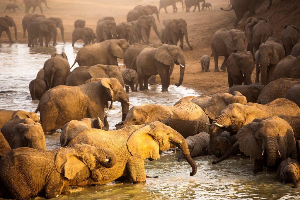 Soñar con elefante, grandes expectativas 2020
