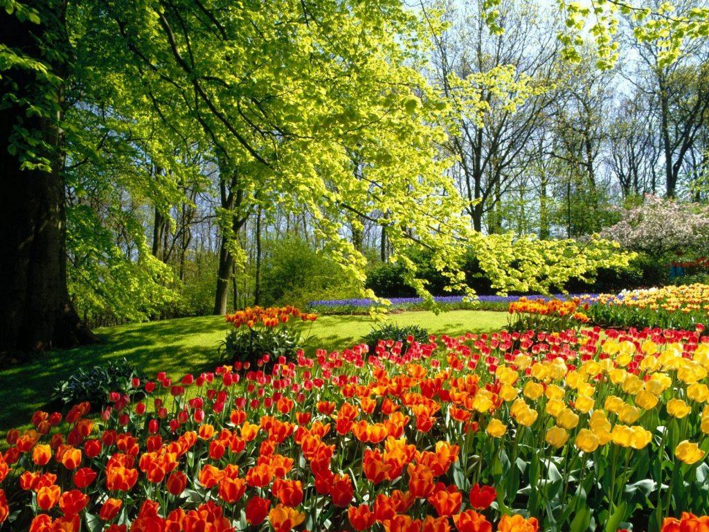 Soñar con Jardín ¿Es realmente tan maravilloso? 2020