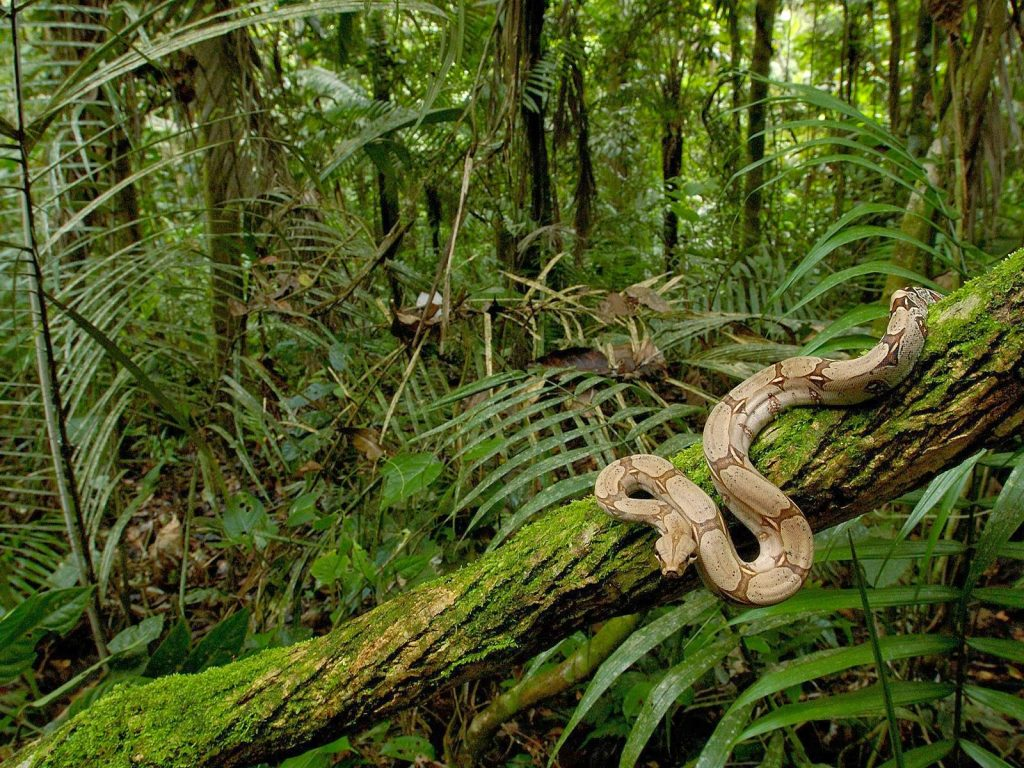 Soñar con selva ¿Que puede significar? 2020