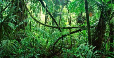 Soñar con selva ¿Que puede significar?