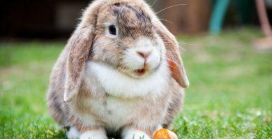 Soñar con conejos ¿sueños buenos o malos?